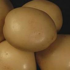 Картофель посадочный Сифра