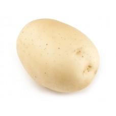 Картофель посадочный Эвора