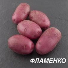Картофель посадочный Фламенко