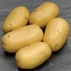 Картофель посадочный Каррера