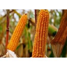 Кукуруза ЕС Кокпит