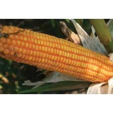 Кукуруза ЕС Сплендис