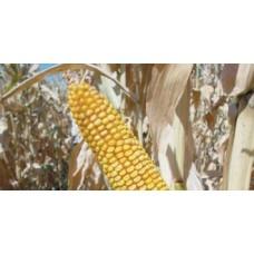 Кукуруза LG 3258