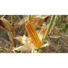 Кукуруза НС-101