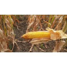 Кукуруза НС-2612