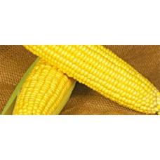 Кукуруза сахарная Оверленд F1