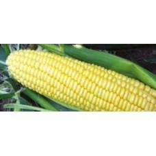 Кукуруза сахарная Свитстар F1