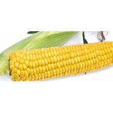 Кукуруза сахарная Старшайн F1