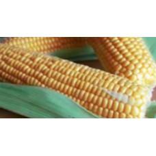 Кукуруза сахарная GSS 1477 F1