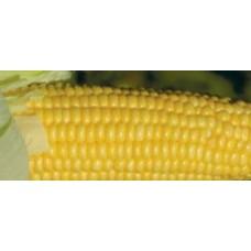 Кукуруза сахарная GH 2042 F1