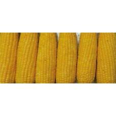 Кукуруза сахарная GH 6462 F1