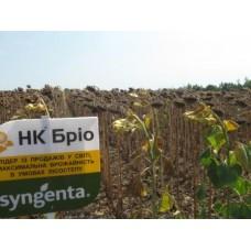 Семена подсолнечника НК Брио